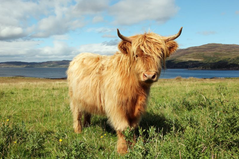 Dag 11 Schotland 2020