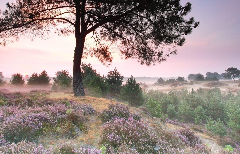 camperreis Drenthe