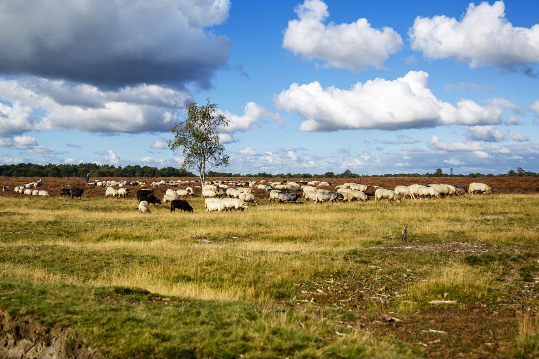 Natuur camperreis Drenthe